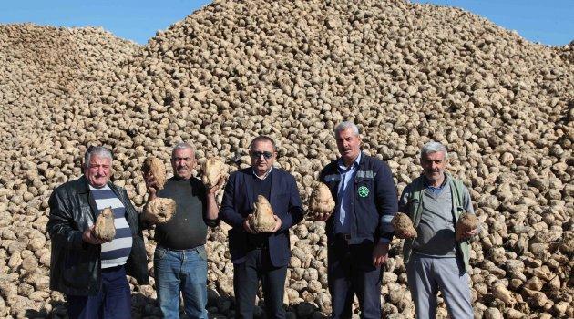 Ahlat'ta 70 bin ton şeker pancarı üretimi
