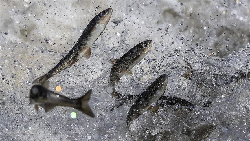 Bitlis'te balık avı yasağı başladı