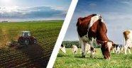 Bitlis'te hayvancılığa 12,9 milyonluk destek