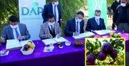Ahlat'ta elma yetiştiricilerine yüzde 50 destek