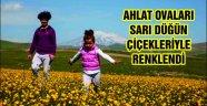 Ahlat ovaları sarı düğün çiçekleriyle renklendi