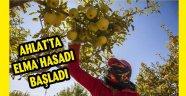 AHLAT'TA ELMA HASADI BAŞLADI