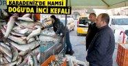 KARADENİZ'DE HAMSİ DOĞU'DA İNCİ KEFALİ
