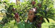 Öğrenciler yetiştirdikleri organik elmaları teneffüste tüketiyor